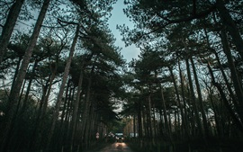 Preview wallpaper Trees, road, cars, dusk