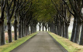 Preview wallpaper Trees, road