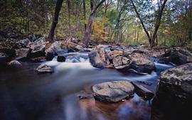 Árboles, piedras, corriente, agua
