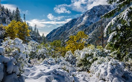 Trinity Alps, snow, mountains, trees, California, USA