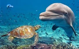 Tartaruga e golfinho, mar