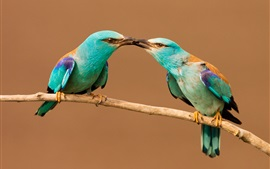 Preview wallpaper Two birds share food, beak, insect