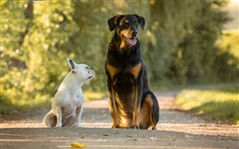 Preview wallpaper Two dogs, road
