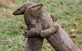 Preview wallpaper Two lizards hugs