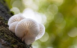 White mushrooms macro photography