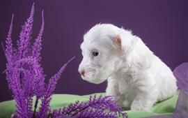 Filhote de cachorro branco, tecido
