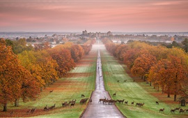 Preview wallpaper Windsor Castle, England, autumn, trees, road, deer, fog