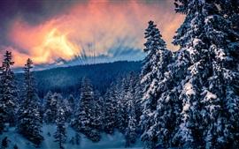 Invierno, bosque, árboles, nieve, nubes, cielo, rayos del sol