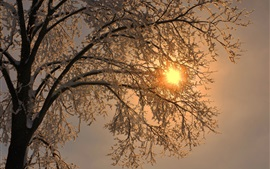 Winter, tree, twigs, snow, sun rays
