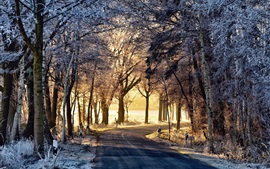 Preview wallpaper Winter, trees, road, morning, fog, sunshine