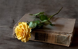 Preview wallpaper Yellow rose, old book