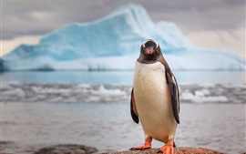 Preview wallpaper Antarctica, penguin, iceberg
