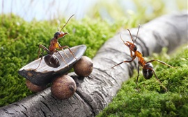 Preview wallpaper Ants, nuts, truck, creative