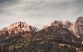 Áustria, Leogang, montanhas, árvores