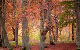 Otoño, bosque, árboles, hojas rojas y amarillas