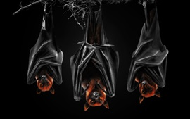 Preview wallpaper Bats, black background