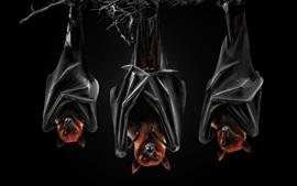 Летучие мыши, черный фон