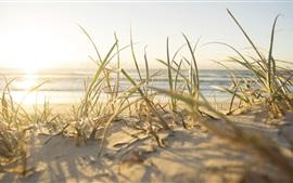 Praia, grama, mar