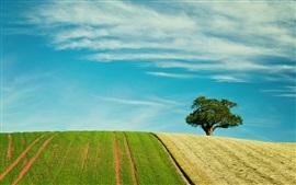 Campos bonitos, árvore, céu azul
