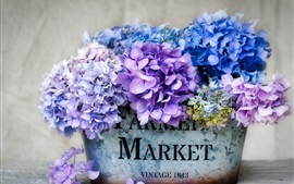 Preview wallpaper Beautiful hydrangea, colorful flowers, inflorescence