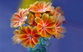 Preview wallpaper Beautiful orange flowers, inflorescence, petals