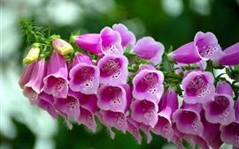 Красивые розовые колокольчики