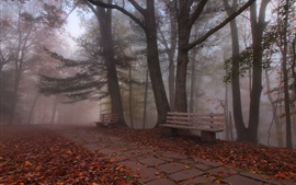 Bench, fog, forest, trees, park, autumn