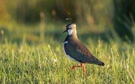 Preview wallpaper Bird, grass, sunshine