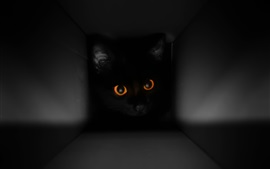 Preview wallpaper Black cat in the box