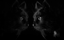 Olhar do gato preto no espelho, fundo preto