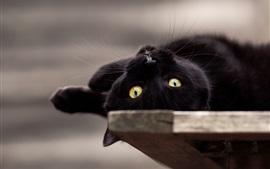 Черная кошка игривая, желтые глаза