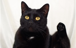 Preview wallpaper Black cat, yellow eyes, look up
