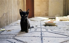 Preview wallpaper Black kitten sit down, look, ground