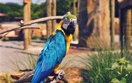 Preview wallpaper Blue feather parrot, macaw