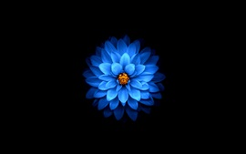 Preview wallpaper Blue flower close-up, black background
