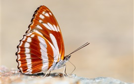 Preview wallpaper Butterfly macro photography, orange wings