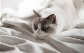 Gato, cama, descanso