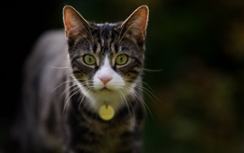 Cat front view, yellow eyes, bokeh
