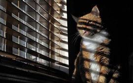 Preview wallpaper Cat sit at windowsill, blinds
