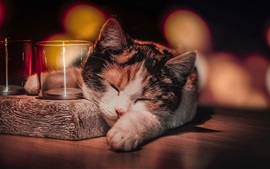 Preview wallpaper Cat sleep, glass cup