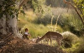 Criança menino e cervo na floresta
