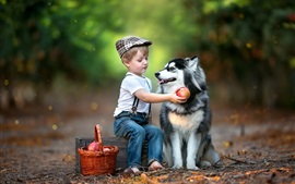 Preview wallpaper Child boy and husky dog
