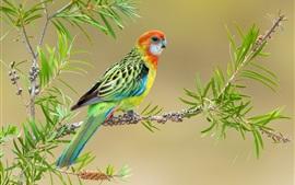 Plumas de colores pájaro, ramitas, hojas