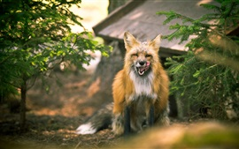 Preview wallpaper Cute fox front view, twigs
