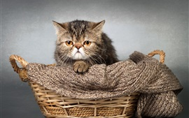 Preview wallpaper Cute kitten, basket, scarf