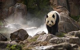 Aperçu fond d'écran Panda mignon à pied, des rochers