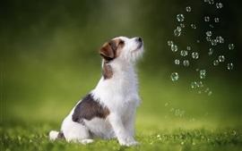 Filhote de cachorro bonito olha para as bolhas