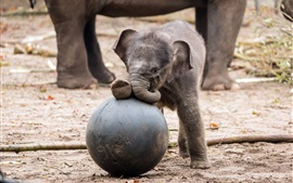 Preview wallpaper Cute small elephant play a ball
