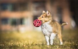 犬はボールをキャッチ