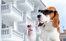 Preview wallpaper Dog eat ice cream, sunglasses, funny animals